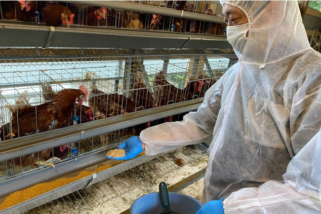 自営の養鶏場で自家製卵を生産