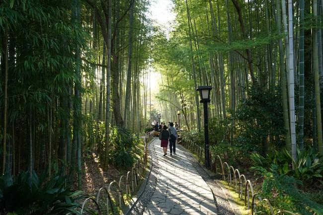 Hostel Knot 竹林の小道