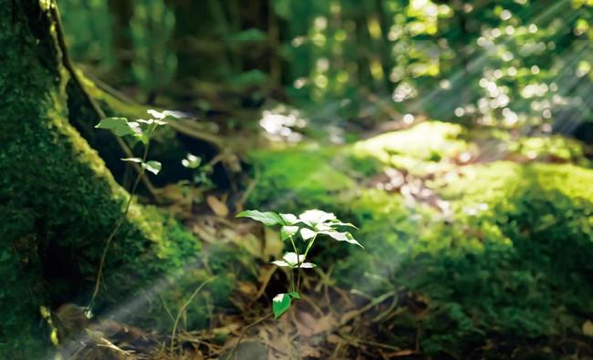 植物の芽吹き