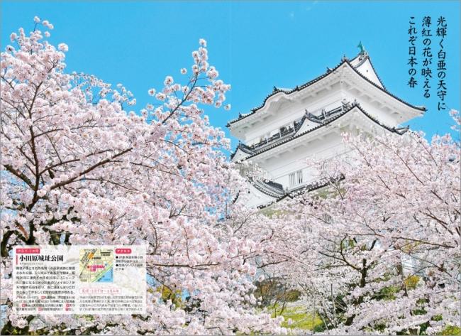 「城址の桜」ページ例