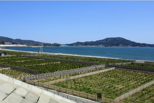 現在の高田松原と砂浜と広田湾