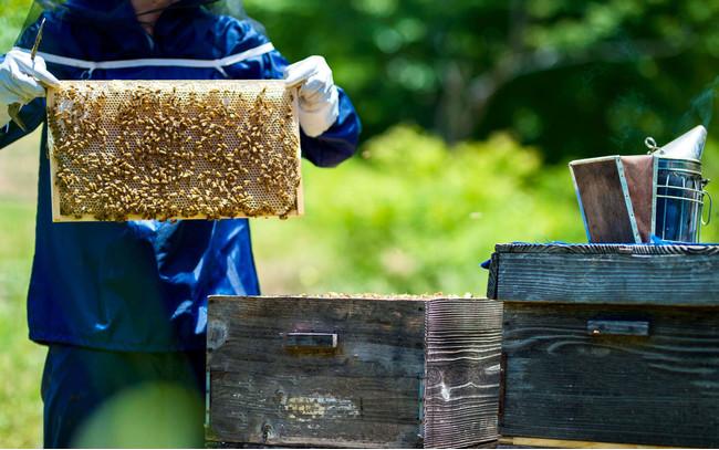 「meadol」国産蜂蜜へのこだわり