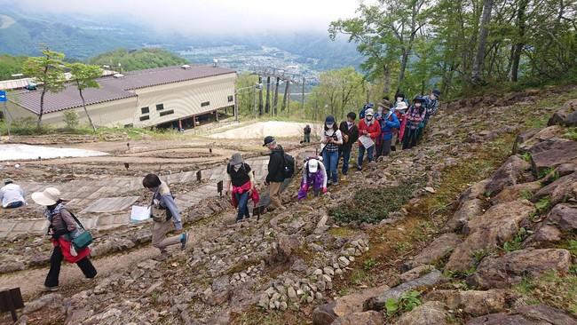 早期開園限定、学芸員とまわる雪解け直後の高山植物園散策ツアー 6月5日(土)