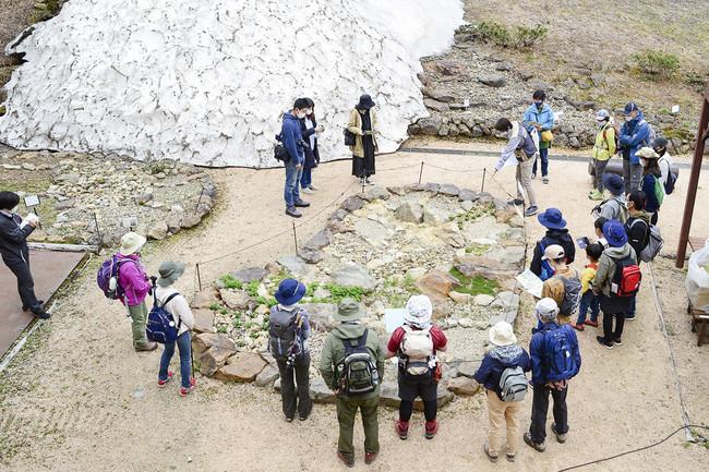 白馬五竜高山植物園「絶滅危惧種コーナー」は、ゴンドラ山頂駅を降りて植物園の入り口にあります。まだ残雪があります。6月5日(土)
