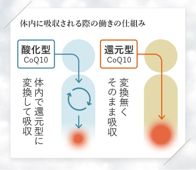 <図1:体内に吸収される際の「コエンザイムQ10」の働きの仕組み>