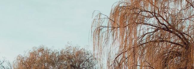 Willowは「柳の木」の強さ、しなやかさから着想を得ています。
