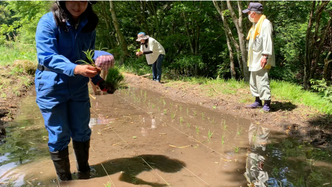 和眞嘉傳 代表取締役 山口 地域の方と一緒に稲を植える