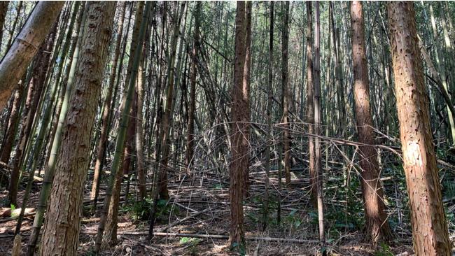 荒れた山林