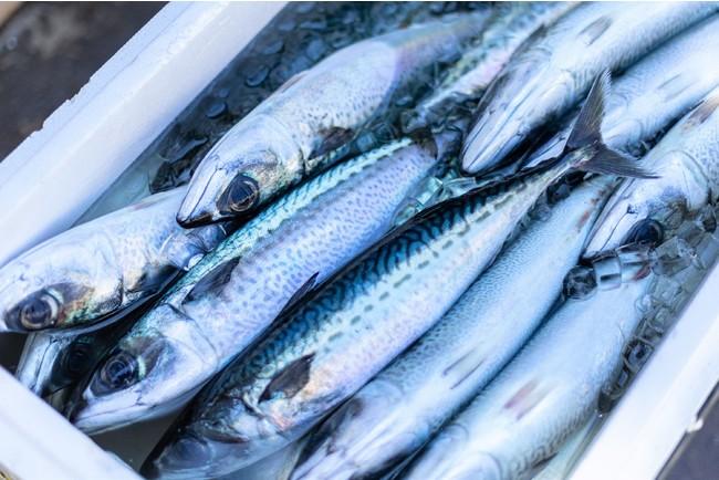 鯖という健康食
