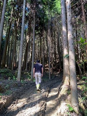 今回の杉の木の故郷。宇陀の森庄さんの森