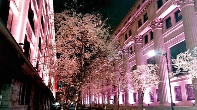 桜・ライトアップ 中央通りと江戸桜通り沿いの外観照明が期間限定で桜色に変わり、絶好のフォトスポットに!17時~24時(4月15日まで)