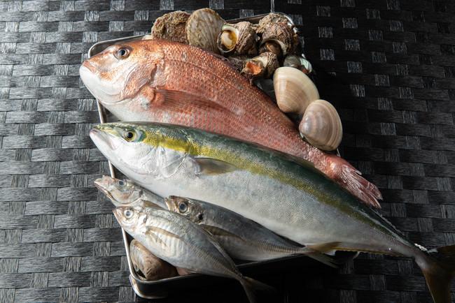 相良湾で獲れた新鮮な海鮮魚貝類