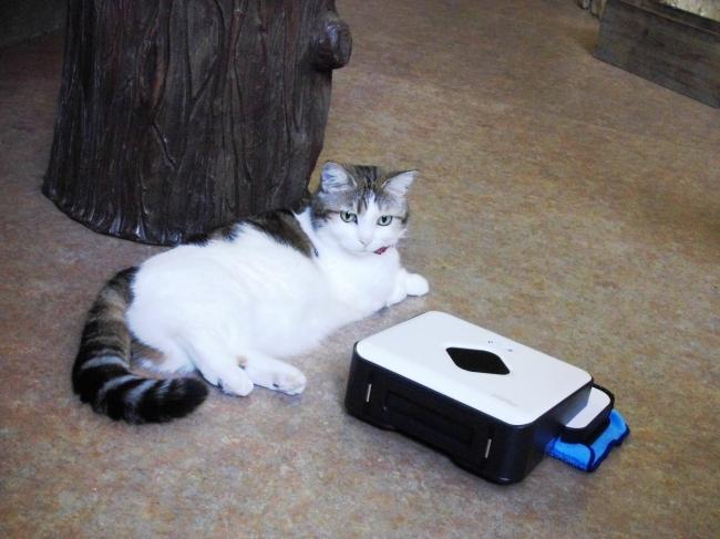 2月2日「猫の日」よりフロアを清掃する床拭きロボット 「ブラーバ380j」