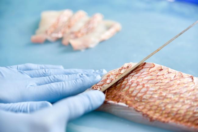 天然魚を新鮮な状態で加工し急速冷凍します。