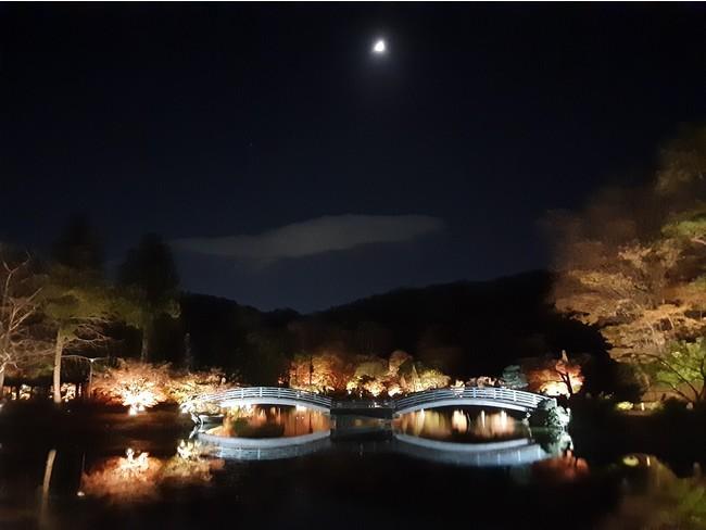 紅葉まつりライトアップ(2020年11月22日撮影)
