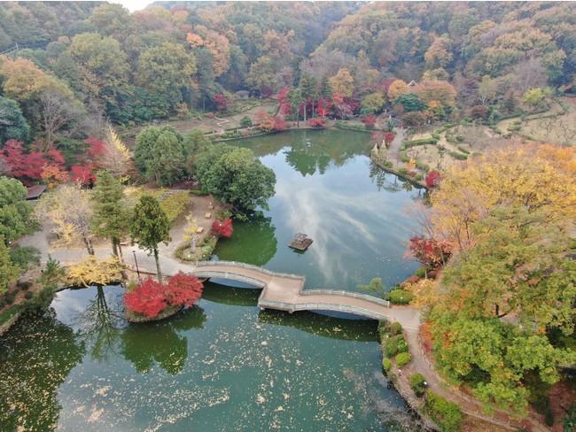 紅葉の町田薬師池公園四季彩の杜 薬師池(2020年11月19日撮影)