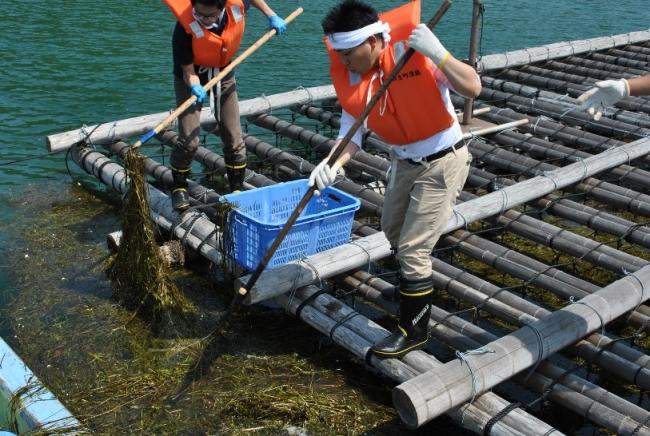 ワタミ社員によるアマモ場清掃の様子