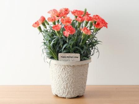 無印良品 2010年「母の日の花」発売のご案内|株式会社良品計画のプレスリリース