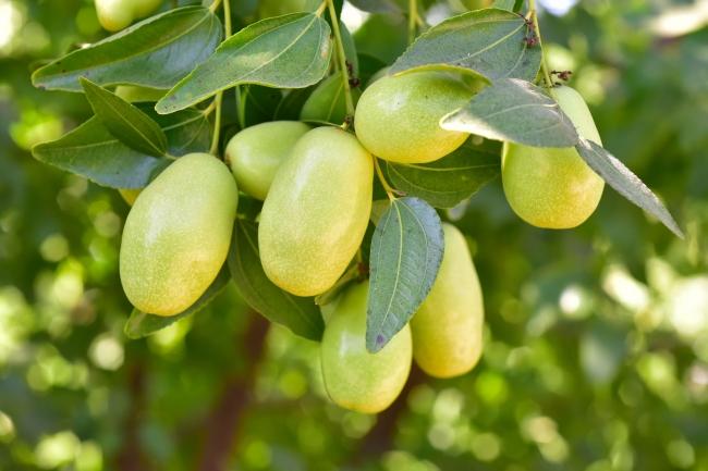 ホホバ種子油(※画像はイメージです)