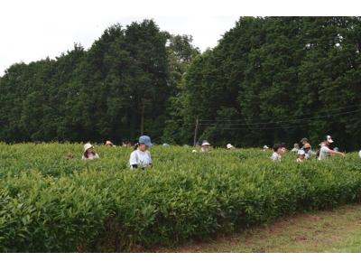 【JAF山口】秋の新茶、お茶摘み体験会開催します!