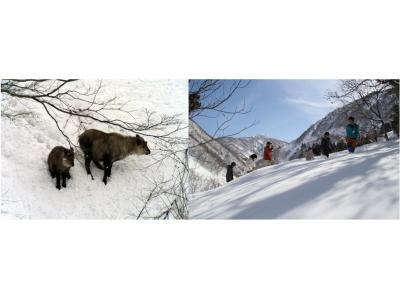 【JAF石川支部】JAF会員向けイベント 2月JAFデー『ブナオ山観察舎周辺かんじきハイク&野生動物観察』を開催