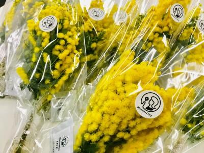 LiB、女性の自分らしい活躍を応援!国際女性デーにちなみ、賛同企業と共に「ミモザの花贈呈企画」を実施!