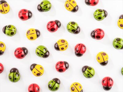 【SNS映え必見!新作日本上陸】お花畑の世界に舞い降りたキュートなショコラ「てんとう虫」と、「プティ・フルール」は華やかでこの夏のギフトにぴったり!