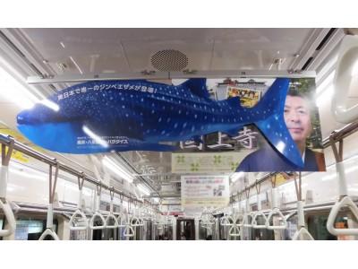 【横浜・八景島シーパラダイス】ストレス激増・指痙攣注意!どうしても東日本唯一のジンベエザメを知って欲しくて・・・「原寸大のジンベエザメサイトを公開!」【サイト公開日:2018年11月14日】