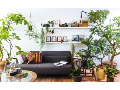 植物に囲まれて癒やしとリフレッシュ「カジュアルプランツのきほん 植物とくらすプログラム」がフェリシモ「ミニツク」から新登場
