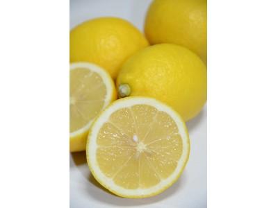 神奈川県との共催企画!第2弾 2019年2月に2回開催 神奈川県西産レモンを使った旬なイベントを開催