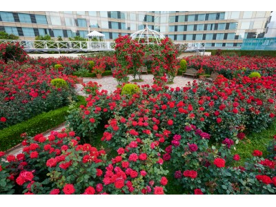 """ホテルのお庭で剪定体験?!""""秘密の花園""""のヒミツに迫る、先着10名の限定セミナー開催"""