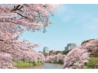 いよいよ都内でも桜開花!都心で桜を存分に満喫できる、超ラグジュアリーお花見宿泊プラン登場!