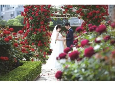 開園20周年記念!真紅のバラ3万輪に包まれる限定ウエディングプラン登場
