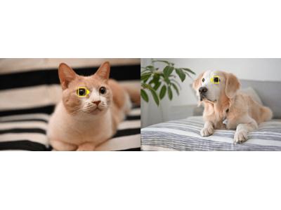 AF性能をさらに進化させ、映像表現の自由度を上げる ニコンZシリーズ用ファームウェアを2種同時公開