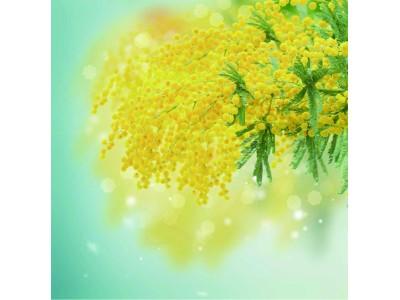 【リーガロイヤルホテル(大阪)】ミモザや早春の花のアレンジで装飾し、特設ティーサロンも登場。リーガロイヤルホテルのショッピングギャラリー「パレロイヤル ミモザ祭」