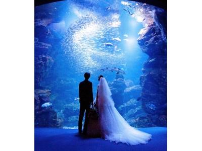 【リーガロイヤルホテル京都】開業50周年記念「京都水族館 前撮りプラン」販売開始