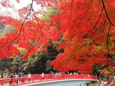 一般社団法人ツーリズムとよた開設記念「秋のモニターツアー」実施<報道関係者、旅行会社、在日外国人無料ご招待のお知らせ>