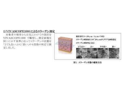 洗顔後の肌実感と肌内部のコラーゲン状態との関係性を確認