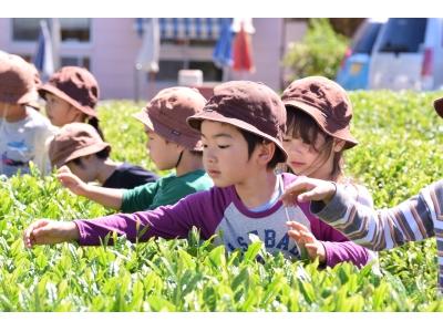 """子どもたちが入間の名産""""お茶""""づくりを体験! 伝統文化の体験保育「ちゃちゃ お茶会イベント」実施"""