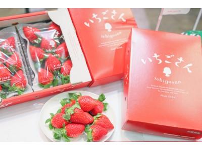 佐賀県から20年ぶりとなる新ブランド開発に7年、1万5000の試験株から選ばれた次世代いちご「いちごさん」ついに東京へ出荷を開始!