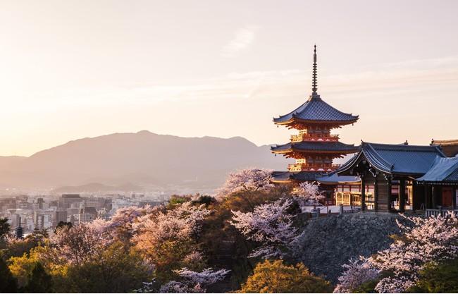 【春の桜旅へ出かけよう!】VMG HOTELS & UNIQUE VENUESの5エリア12会場でお花見スポット公開&お花見セットプラン新登場!