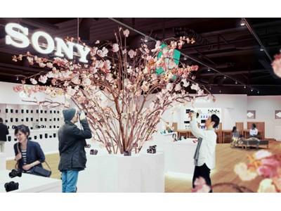 3月1日(木)より全国5店舗のソニーストアにて『桜 in Sony Store 2018』を開催!一足早く満開の桜を観ながらソニー製品をお楽しみいただけます
