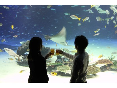 魚や海の生き物たち、イルミネーションを眺めながら、缶つまとお酒で乾杯!山梨県笛吹市の鵜飼が見られる特別イベントも開催!缶つまナイト in サンシャイン水族館2018