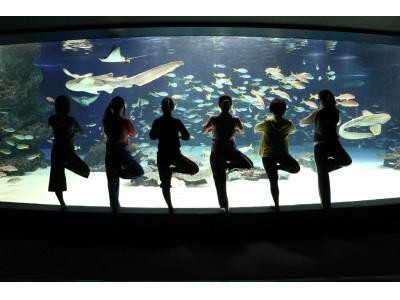 南国の海を感じさせる大水槽や、海抜251mの高さからの眺望を眺めながらヨガにチャレンジ!!サンシャイン女子道企画『サンシャインシティでヨガ!』