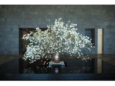 「ザ・ラウンジ by アマン」にて桜をひと足先に愛でる、桜のカクテルとHANAMI BENTOを期間限定でご提供
