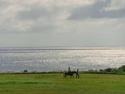 【ホテル日航アリビラ】<1日8室限定>スーペリアテラス 沖縄の豊かな自然を楽しむ 春から初夏の宿泊プラン 販売開始
