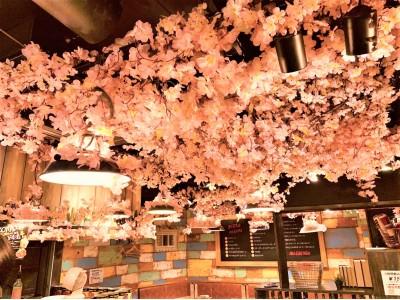 桜満開!!快適花見!!話題の『インドア花見』『エア花見』『店内花見』をCONA15店舗で期間限定開催!! 天候・花粉・場所取りを気にせず、ワイン、窯焼Pizzaとお花見をお楽しみいただけます。