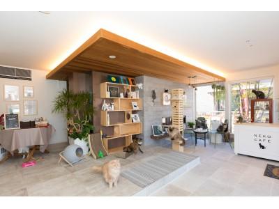 2月22日「猫の日」にリニューアルオープン。当社初 猫カフェをモチーフにした住宅展示場を幕張に公開(PR)