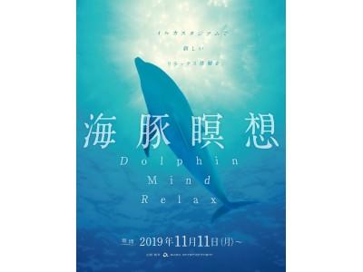 【京都水族館】イルカの日常を一緒に過ごしてリラックスする新しいプログラム「海豚瞑想 Dolphin Mind Relax」2019年11月11日(月)スタート