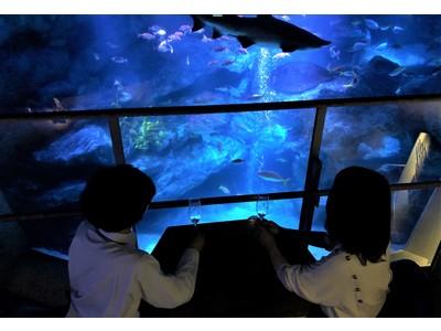 【すみだ水族館】一夜限り!14組限定、貸し切り水族館でフルコースディナーを楽しめる 体験型福袋「ザ・プレミアム・ブルーナイト」を販売
